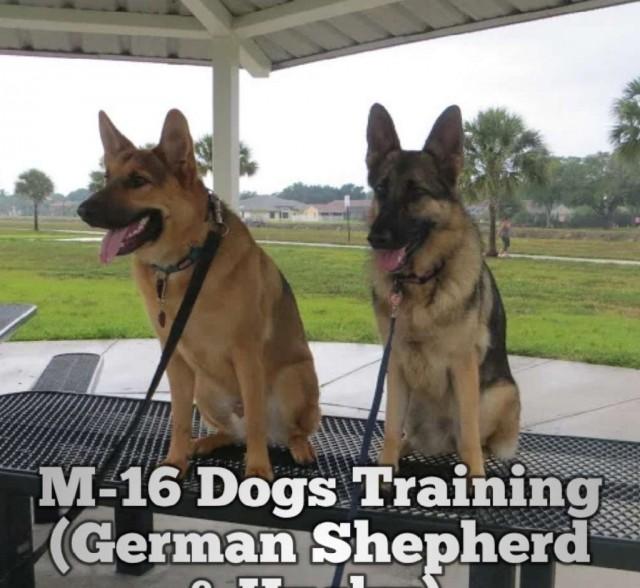 M16 استيراد وتدريب جميع انواع الكلاب تدريب انواع الببغاوات والطيور المنزليه