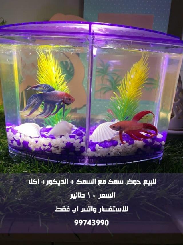 للبيع حوض سمك مع السمك والزينه
