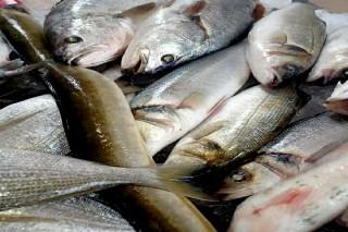 أسماك كويتى طازجة